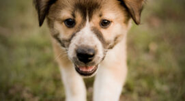 Royal Canin kutyatáp