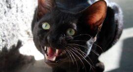 A macskatáp megvásárlása könnyedén megy